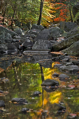 Foliage Photograph - Reflecting On Fall by Susan Candelario