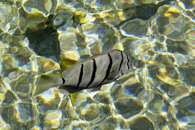 Reflection Fish Print by Bob Slitzan