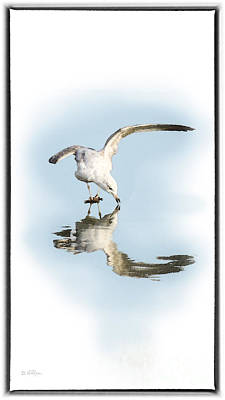 Seagull Digital Art - Reflection In Ice by Betty LaRue