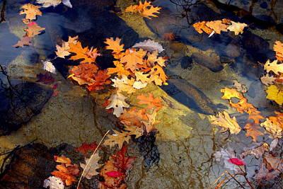 Reflection Print by Marcia Lee Jones