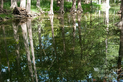 Photograph - Reflections by Barbara Shallue