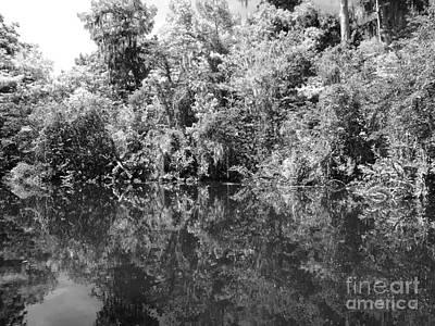 Alligator Bayou Photograph - Reflections by Carey Chen