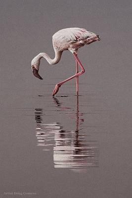 Flamingo Drawing - Reflections by Doug Comeau