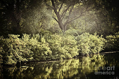 Leaves Photograph - Reflections In Water by Elena Elisseeva