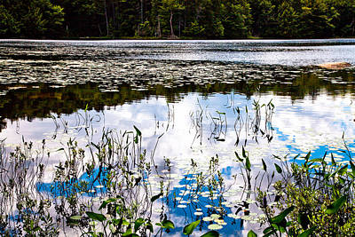 Lily Photograph - Reflections On Cary Lake by David Patterson