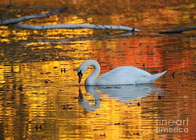 Reflections On Golden Pond Print by Jayne Carney