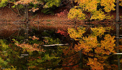Fall Foliage Photograph - Reflective Colors by Lourry Legarde