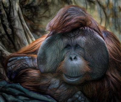Orangutan Mixed Media - Relaxing by Victor Ozogar