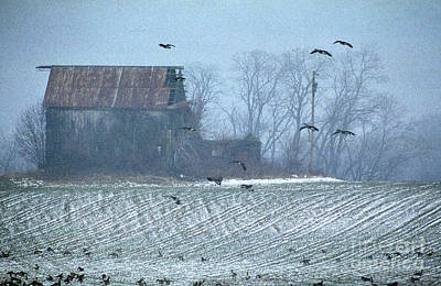 Of Birds Photograph - Remembering The Farm by Skip Willits