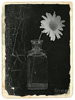 Aster Mixed Media - Remembrance Bw 7 by Chalet Roome-Rigdon