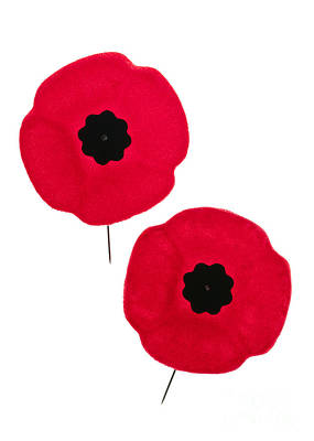 Remembrance Day Poppies Print by Elena Elisseeva