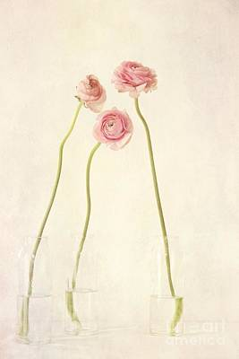 Soft Digital Art - Renoncules by Priska Wettstein