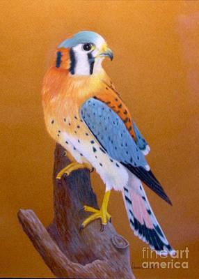 Rescued American Kestrel Original by Island Time Artwork by Dawn Nadeau Olmsted