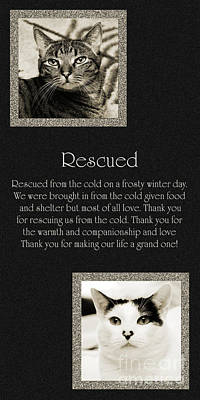 Kitty Digital Art - Rescued by Andee Design