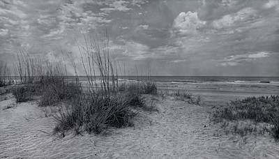 Magical Place Photograph - Resilient Presence by Betsy C Knapp