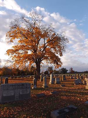 Elkton Photograph - Rest In Fall by Shannon Freeman