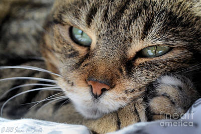 Susan Smith Photograph - Rest by Susan Smith