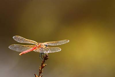 Dragonfly Photograph - Rest Time 2 by FireFlux Studios