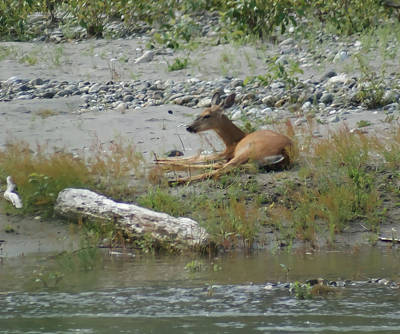 Nature Photograph - Resting by Gloria Gilbert