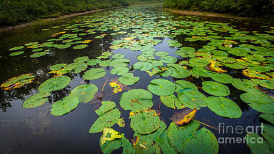 Resting Lilly Pads Print by Andrew Slater