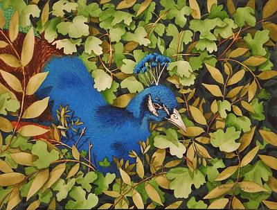 Limited Edition Painting - Resting Peacock by Katherine Young-Beck