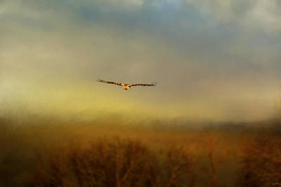 Hawk Photograph - Retreating Red Tail by Jai Johnson