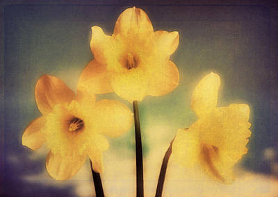 Flower Photograph - Retro Daffodils by Georgiana Romanovna