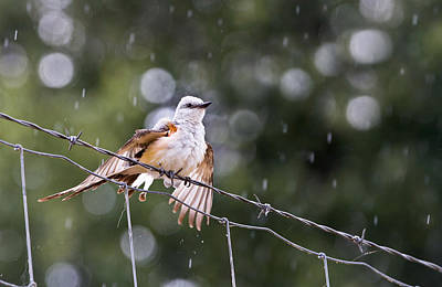 Flycatcher Photograph - Revelling In The Rain by Annette Hugen