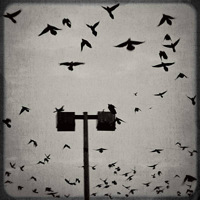 Revenge Of The Birds Print by Trish Mistric