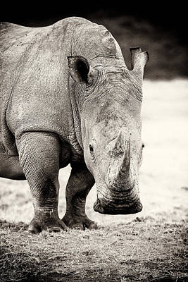 Rhino After The Rain Print by Mike Gaudaur