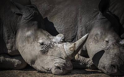 Odd Portrait Photograph - Rhino by Chris Fletcher