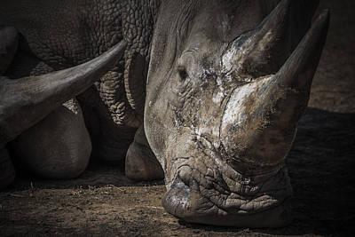 Odd Portrait Photograph - Rhino Portrait by Chris Fletcher