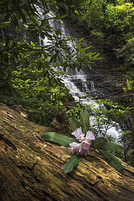 Rhododendron At The Falls Print by Debra and Dave Vanderlaan
