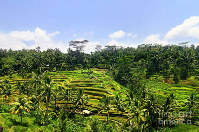 Rice Terrace In Bali Print by Lars Ruecker