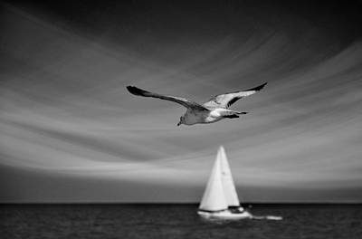 Seagull Photograph - Ride The Wind by Laura Fasulo