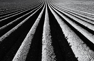 Plough Photograph - Ridge And Furrow by Tim Gainey