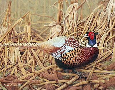 Pheasant Painting - Ring-necked Pheasant by Ken Everett