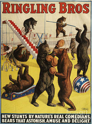 Vintage Poster Drawing - Ringling Bros 1900s Bears Performing by The Advertising Archives