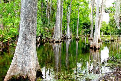 Alligator Bayou Photograph - River Bend  by Carey Chen