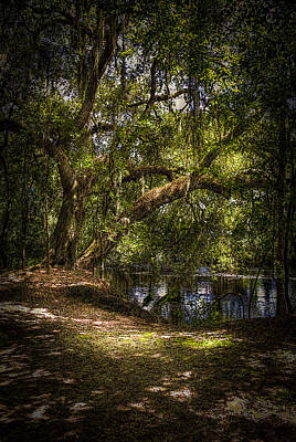 Dark Roots Photograph - River Oak by Marvin Spates
