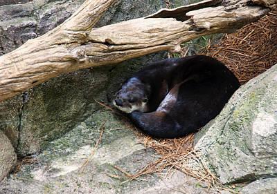 Otter Digital Art - River Otter Resting by Chris Flees