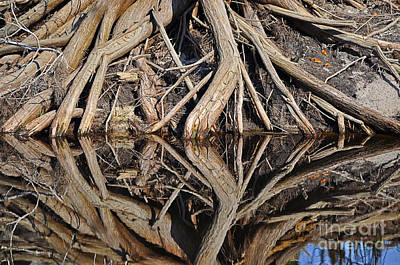 River Roots Print by Al Powell Photography USA
