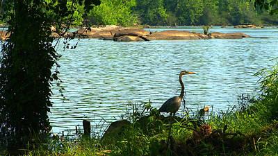 Photograph - River Shade by Benjamin Prater