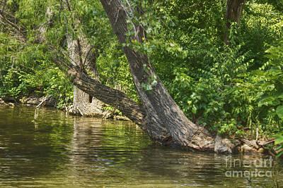 River Tree Print by Jeremy Linot