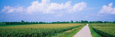 Daviess County Photograph - Road Along Corn Fields, Jo Daviess by Panoramic Images