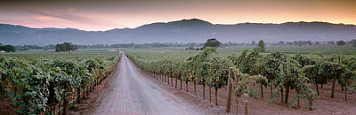 Vineyard In Napa Photograph - Road In A Vineyard, Napa Valley by Panoramic Images