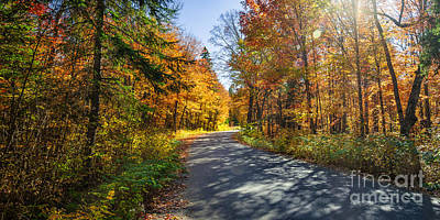 Road In Fall Forest Print by Elena Elisseeva