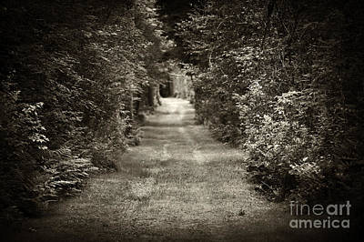 Overgrown Photograph - Road Through Forest by Elena Elisseeva