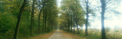 Road With Fog, France Print by Panoramic Images