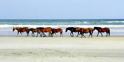 Wild Horse Photograph - Roaming Wild And Free by Kim Galluzzo Wozniak